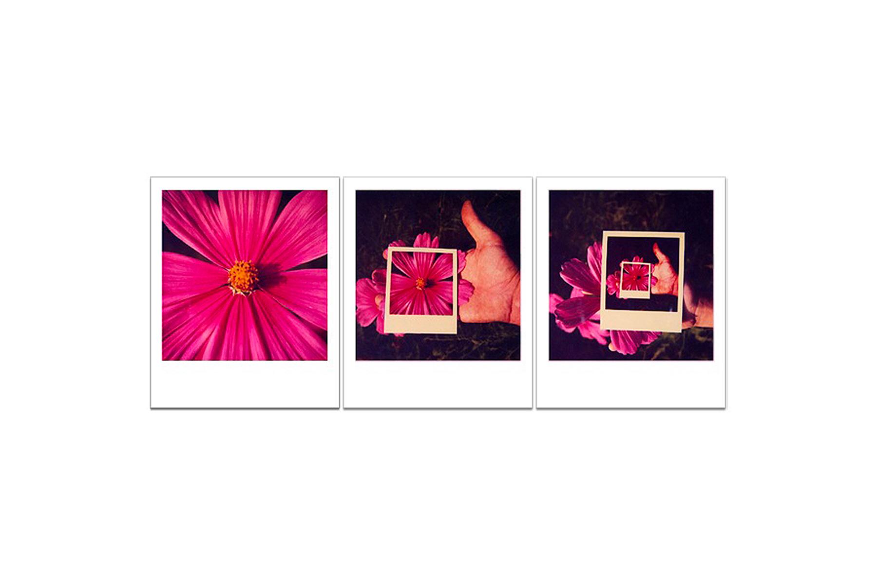 Passione Polaroid
