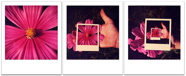 Polaroiders Selection #6 - Fiore (trittico)